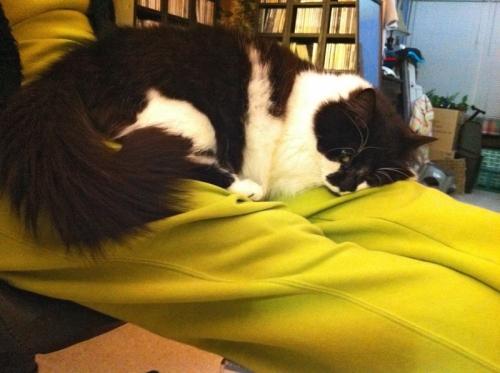 Comfortcat1_blog