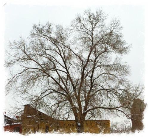 Treefractal_blog