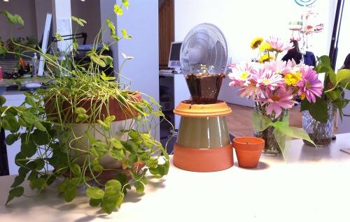 Deskplants