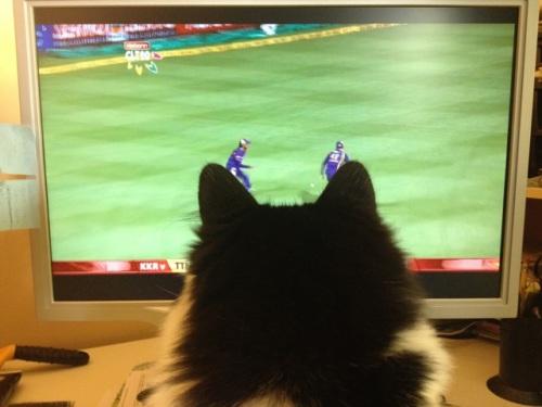 Dasie_cricket
