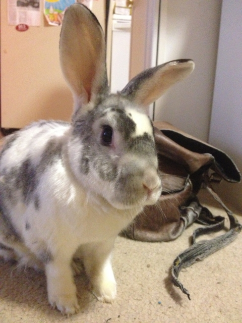 Photo of Robbin Rabbit feigning innocence.