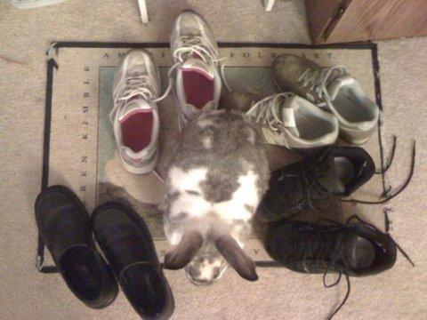 photo of Robbin Rabbit as Shoe Bunny.