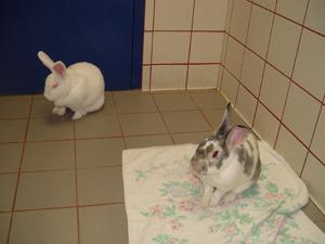 bunny date