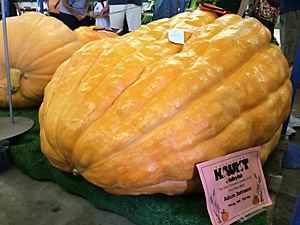 photo of giant pumpkin