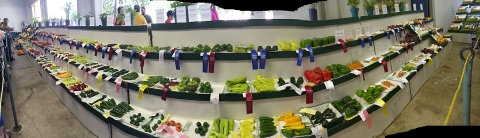 panoramic photo of vegetables