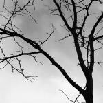 Poetry 6-30 B-branch-1